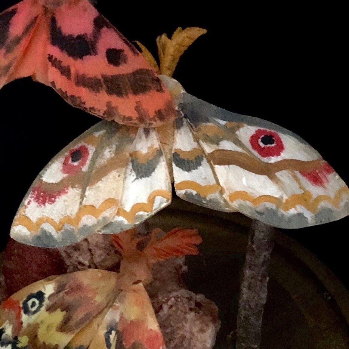 Moths in flight.