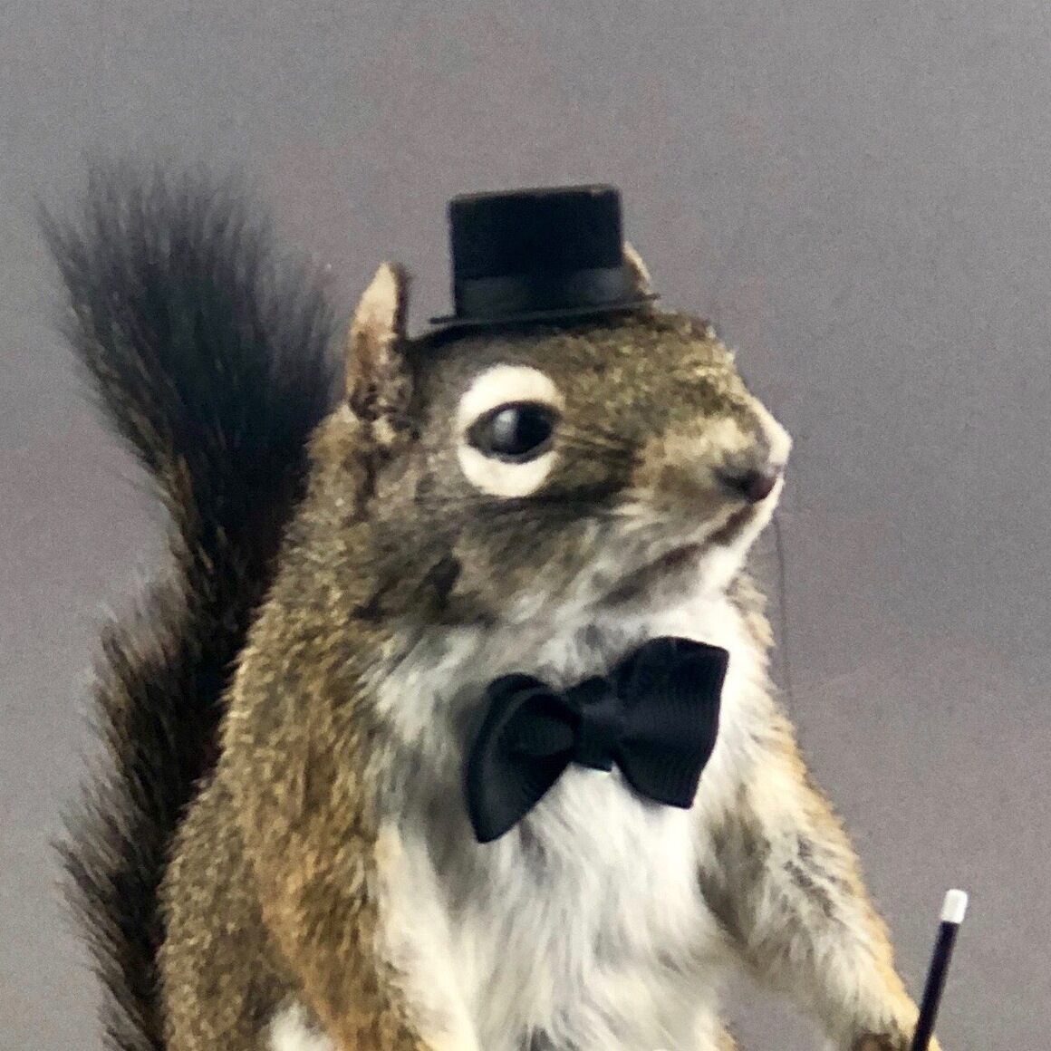 Magician Squirrel