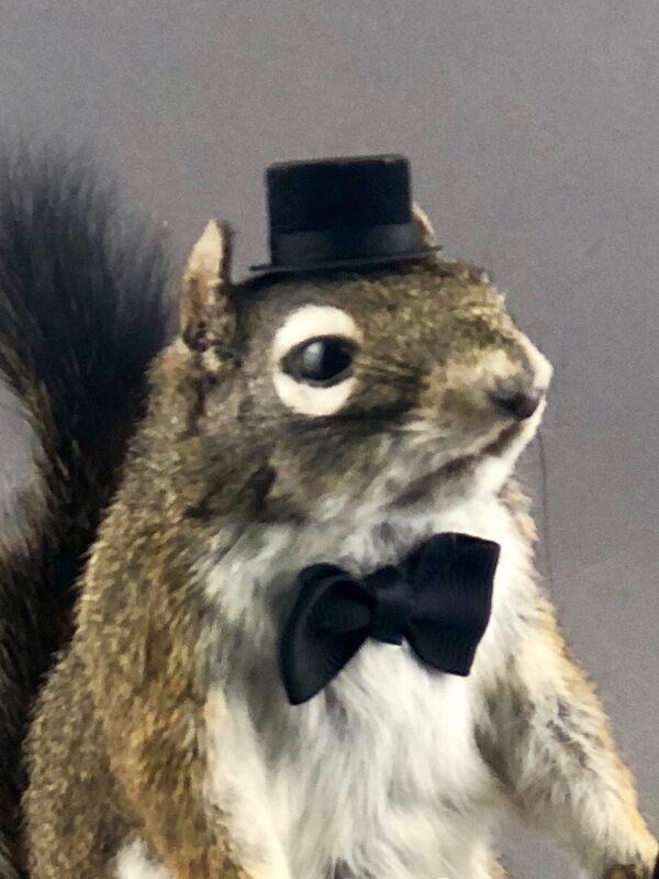 Magician Squirrel