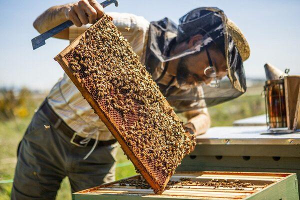 Visit Rooftop Honey Bee Hives