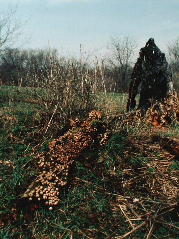 Ana Mendieta, Untitled (from Silueta Works in Iowa), 1978. Chromogenic color (Ektacolor) print. Henry Art Gallery, University of Washington, Seattle, Joseph and Elaine Monsen Photography Collection, 2006.53.