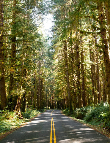 Upper Hoh Road, Olympic National Park, Oregon.