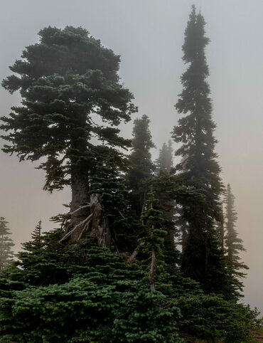 A foggy view from Washington's Mount Rainier, the most glaciated peak in the continental United States.