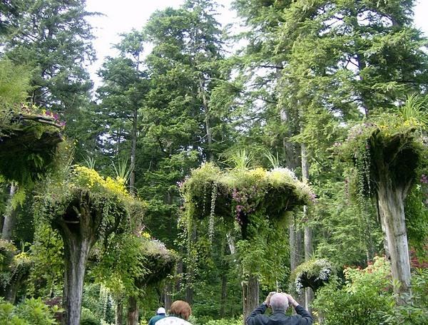 The Upside Forest Of Mendenhall Gardens Juneau Alaska