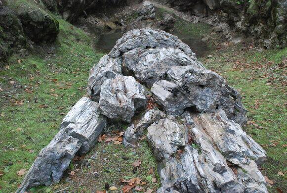 Calistoga Petrified Forest