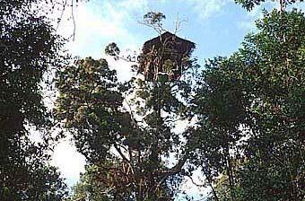 Korowai Tree Houses – Kia, Indonesia - Atlas Obscura