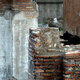 Cats lounging on ancient architecture