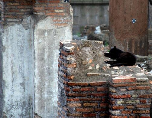 Rome-Column-Cat-web.jpg