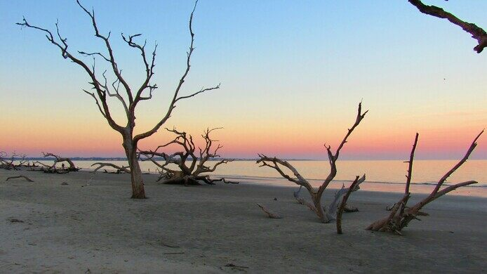 Jekyll Island Georgia Driftwood Beach