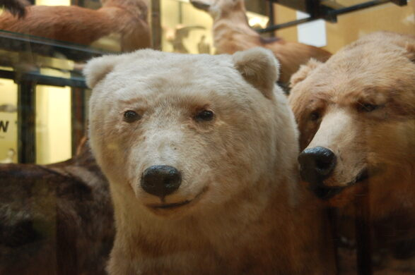 Tring Natural History Museum Hybrid Animals – Tring, England
