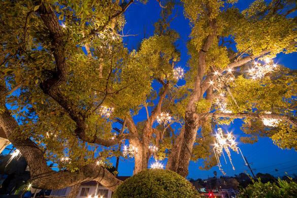 Chandelier Tree – Los Angeles, California - Atlas Obscura