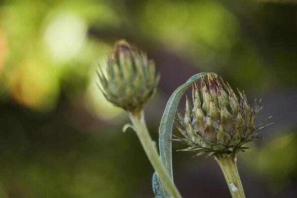 Carl S English Jr Botanical Gardens Seattle Washington Atlas Obscura