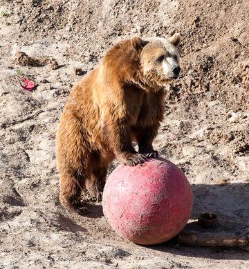 The Wild Animal Sanctuary – Keenesburg, Colorado - Atlas Obscura