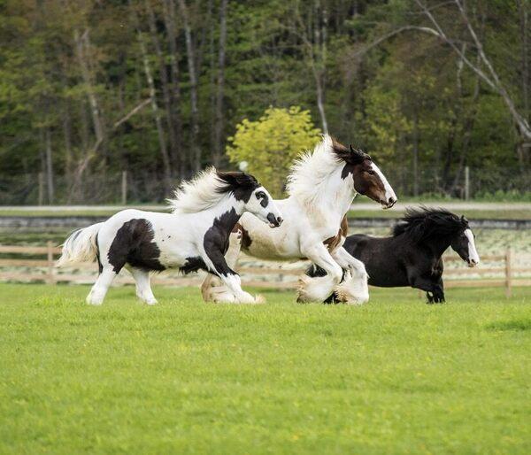 Gypsy Gold Horse Farm Ocala Florida Atlas Obscura