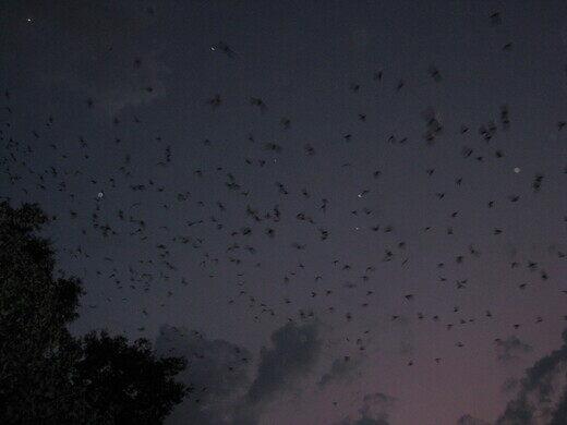University of Florida Bat Houses