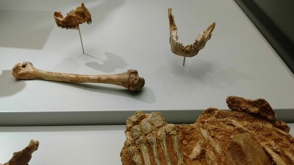 El Sidrón Neanderthal Bones in Oviedo, Spain