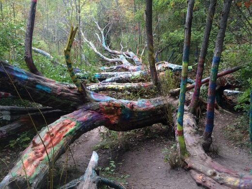 The Hippie Tree Traverse City Michigan Atlas Obscura
