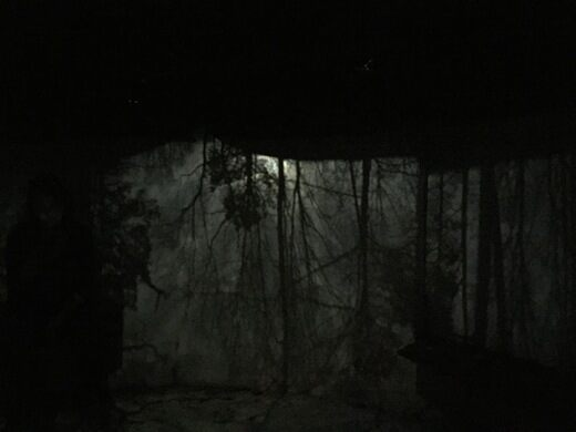 Cloud Chamber for the Trees and Sky – Raleigh, North
