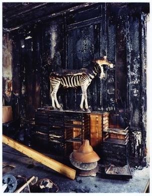 deyrolle taxidermy paris france atlas obscura. Black Bedroom Furniture Sets. Home Design Ideas