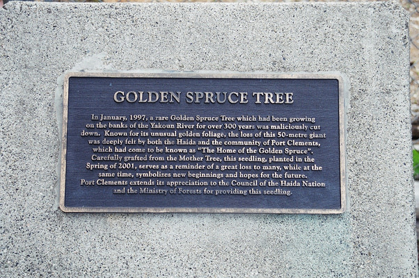 Golden Spruce Images Plaque For The Golden Spruce