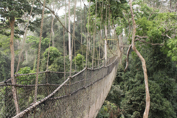 View all photos & Kakum Canopy Walk u2013 Assin South Ghana - Atlas Obscura