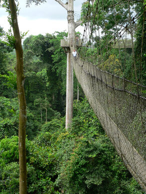 Kakum Canopy Walkway Stig Nygaard on Flickr (Creative Commons) & Kakum Canopy Walk u2013 Assin South Ghana - Atlas Obscura