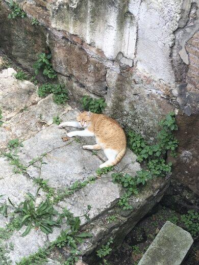Torre Argentina (Roman Cat Sanctuary) – Rome, Italy - Atlas Obscura