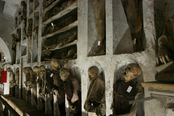 Capuchin Monkeys as Pets