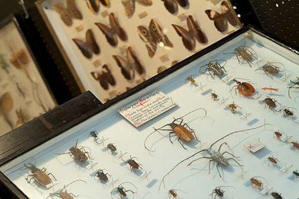 Colorado Springs Natural History Museum