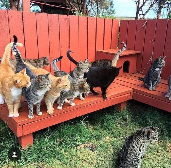 Cat Adoption Events Denver