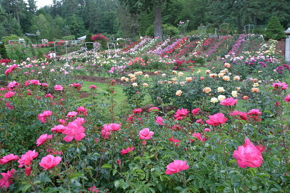 International Rose Test Garden – Portland, Oregon - Atlas Obscura