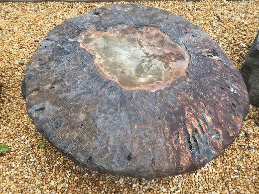 Gilboa Fossils