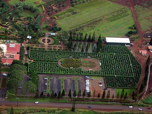 World's Largest Plant Maze - Wahiawa, Hawaii - Atlas Obscura