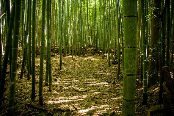 Sagano Bamboo Forest Kyoto Japan Atlas Obscura