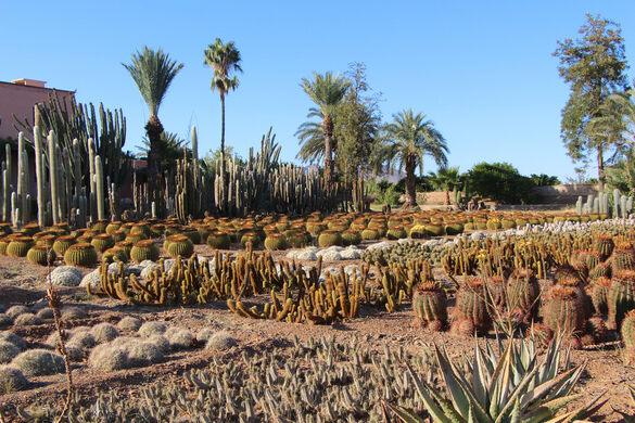 Cactus Thiemann – Marrakesh, Morocco - Atlas Obscura