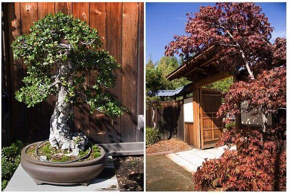 Lake Merritt 39 S Bonsai Garden Oakland California Atlas Obscura