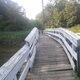 Bridge where the shark was spotted in Matawan Creek