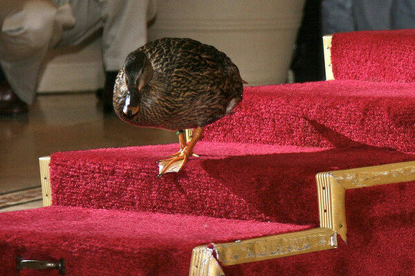Peabody Hotel Duck March Memphis Tennessee Atlas Obscura