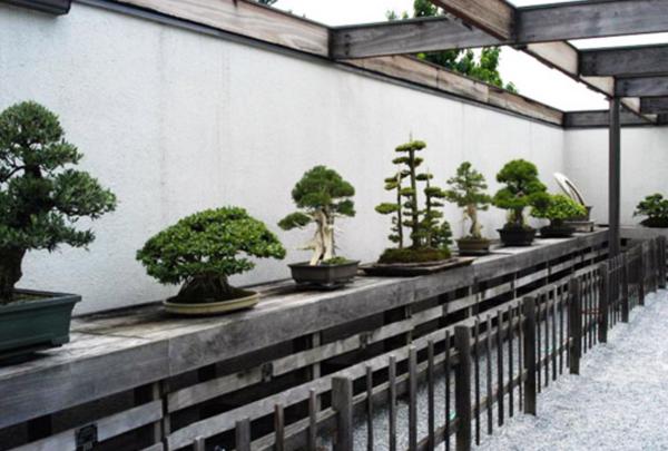 national bonsai museum washington d c atlas obscura. Black Bedroom Furniture Sets. Home Design Ideas