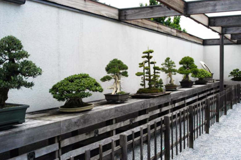 National Bonsai Museum Washington D C Atlas Obscura