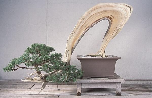 National Bonsai Museum Washington D C Atlas Obscura