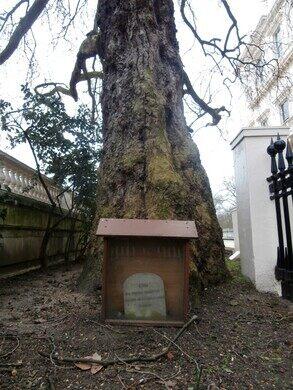 Giro the Dog's Grave
