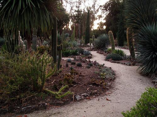 Arizona Cactus Garden. View All Photos