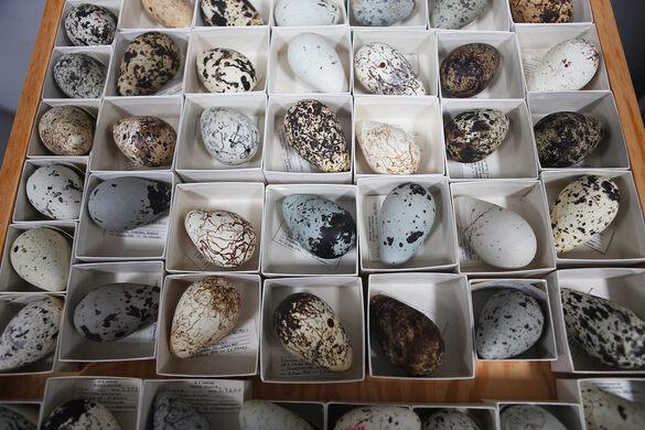 Western Foundation of Vertebrate Zoology – Camarillo