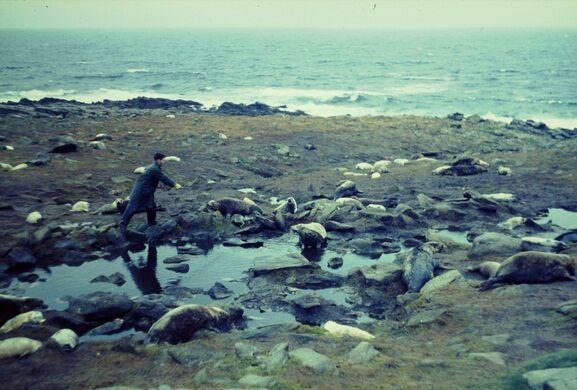 North Rona Island