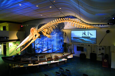 The Oozing Whale Skeleton of New Bedford – New Bedford