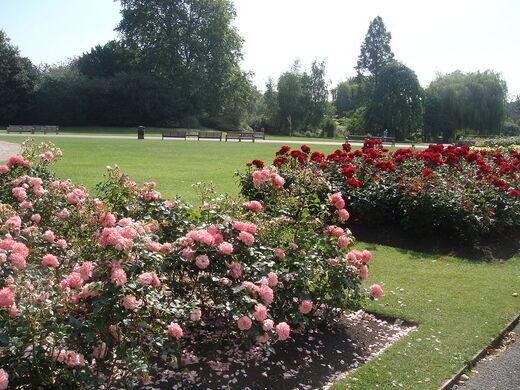 Roses In Garden: Queen Mary's Garden