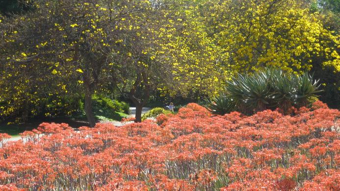 Arboretum Botanical Gardens Arcadia California