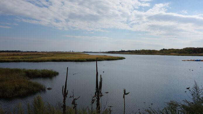 Marine Park Salt Marsh