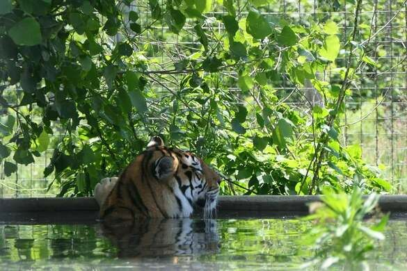 exotic feline rescue center center point indiana atlas obscura